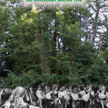 The Lime - the Slovenian sacred tree